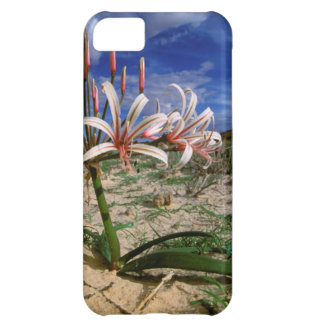 Vlei Lily (Nerine Laticoma) In Flower iPhone 5C Case