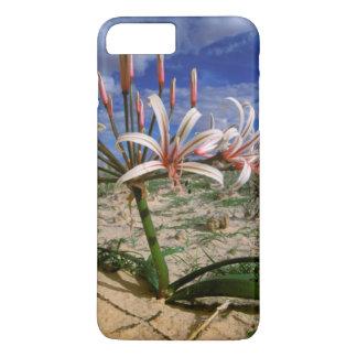 Vlei Lily (Nerine Laticoma) In Flower iPhone 8 Plus/7 Plus Case