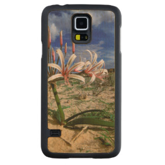 Vlei Lily (Nerine Laticoma) In Flower Maple Galaxy S5 Slim Case