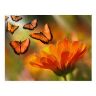 vlinder wens kaarten
