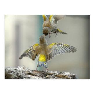 vogels wens kaart