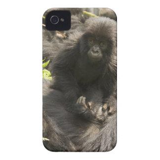 Volcanoes National Park, Mountain Gorilla, baby iPhone 4 Case