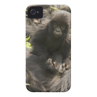 Volcanoes National Park, Mountain Gorilla, baby Case-Mate iPhone 4 Cases