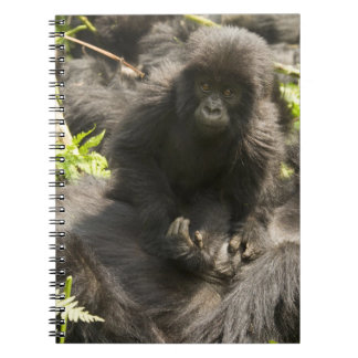 Volcanoes National Park, Mountain Gorilla, baby Note Books
