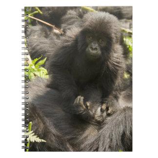 Volcanoes National Park, Mountain Gorilla, baby Notebook