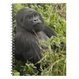 Volcanoes National Park, Mountain Gorilla Notebook