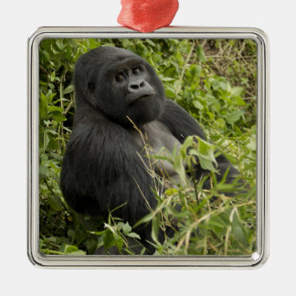 Volcanoes National Park, Mountain Gorilla Silver-Colored Square Decoration