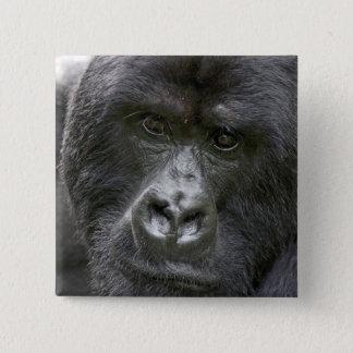 Volcanoes NP, Rwanda, Mountain Gorillas, 15 Cm Square Badge