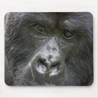 Volcanoes NP, Rwanda, Mountain Gorillas, Mouse Mat