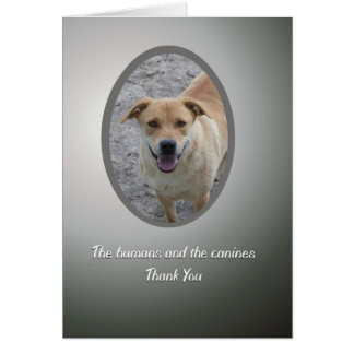 Volunteer Thank You, Dog Rescue Greeting Card