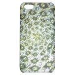 vortex iPhone 5C cases