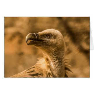Vulture Bird Greeting Card