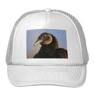 vulture hat