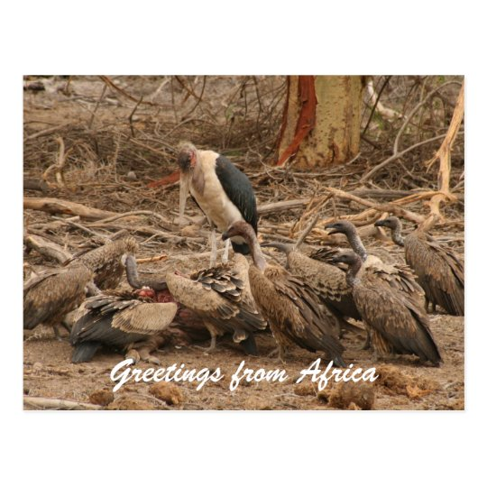 vulture crowd postcard