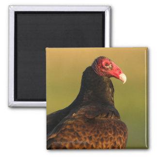 Vulture Square Magnet