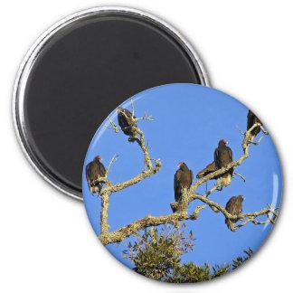Vultures Magnet
