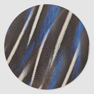 Vulturine Guineafowl feather Classic Round Sticker