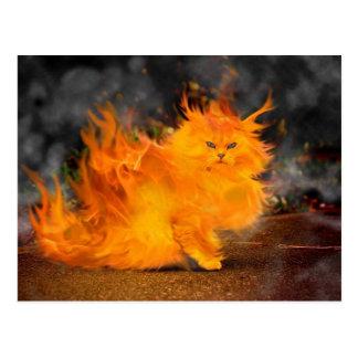 vuur kat wens kaarten