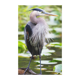 WA, Juanita Bay Wetland, Great Blue Heron Canvas Print
