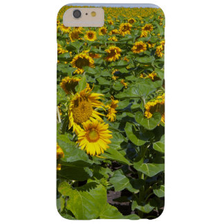 WA, Kittitas County, Sunflower Field Barely There iPhone 6 Plus Case
