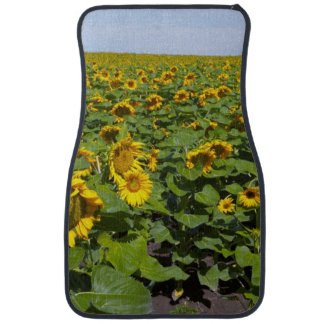 WA, Kittitas County, Sunflower Field Car Mat