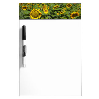 WA, Kittitas County, Sunflower Field Dry Erase Board