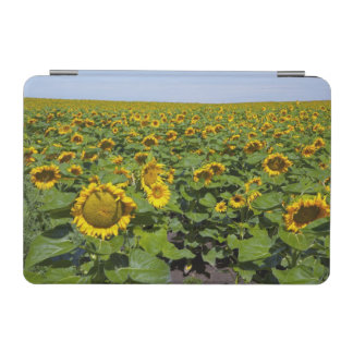 WA, Kittitas County, Sunflower Field iPad Mini Cover