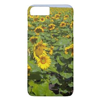 WA, Kittitas County, Sunflower Field iPhone 8 Plus/7 Plus Case
