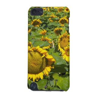 WA, Kittitas County, Sunflower Field iPod Touch 5G Case
