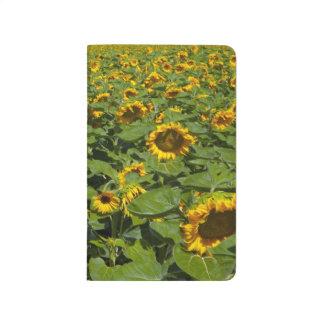 WA, Kittitas County, Sunflower Field Journal