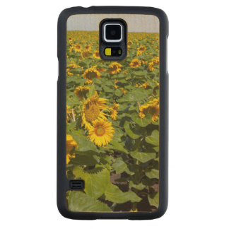 WA, Kittitas County, Sunflower Field Maple Galaxy S5 Case