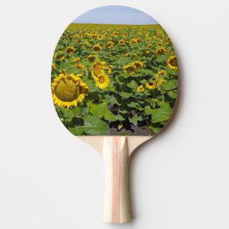 WA, Kittitas County, Sunflower Field Ping Pong Paddle