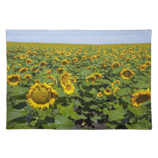 WA, Kittitas County, Sunflower Field Placemat