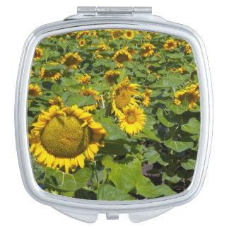 WA, Kittitas County, Sunflower Field Travel Mirror