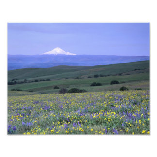 WA, Klickitat County, Dalles Mountain Ranch, Photo Print