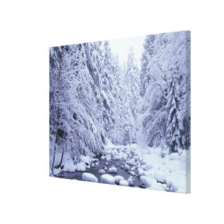 WA, Mount Baker-Snoqualmie National Forest, Canvas Print