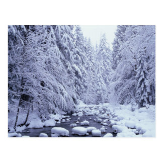 WA, Mount Baker-Snoqualmie National Forest, Postcard