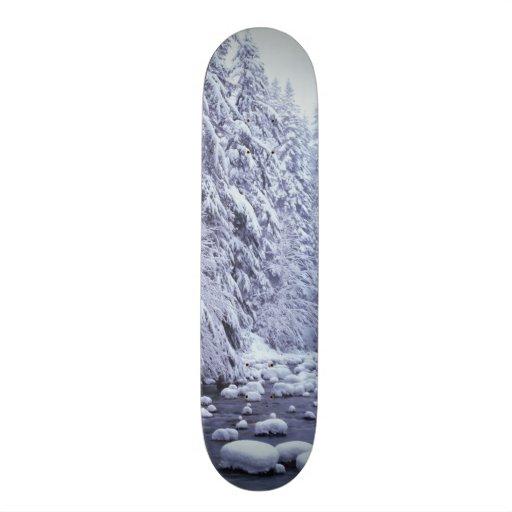 WA, Mount Baker-Snoqualmie National Forest, Skate Board