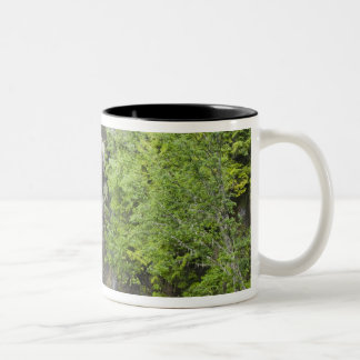 WA, Mount Rainier National Park, Christine Falls Coffee Mug