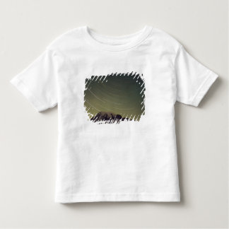 WA, Mount Rainier National Park, Mount Rainier, Tee Shirts