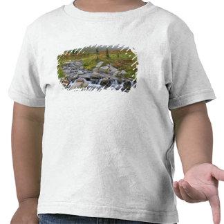WA, Mt. Rainier National Park, Edith Creek Tshirts