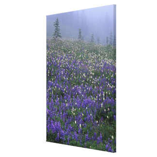 WA, Mt. Rainier NP, Lupine and Bistort meadow Canvas Print