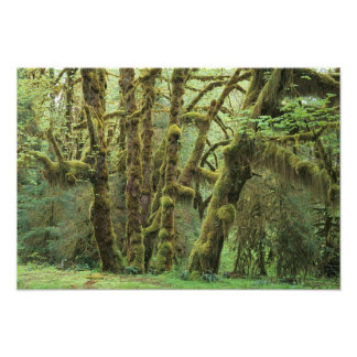 WA, Olympic NP, Hoh Rain Forest, Hall of Photo Art