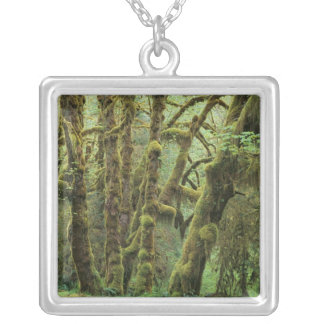 WA, Olympic NP, Hoh Rain Forest, Hall of Square Pendant Necklace