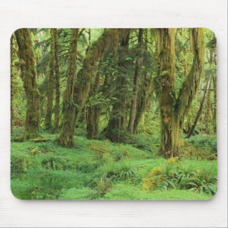 WA, Olympic NP, Quinault Rain Forest, moss Mouse Mat