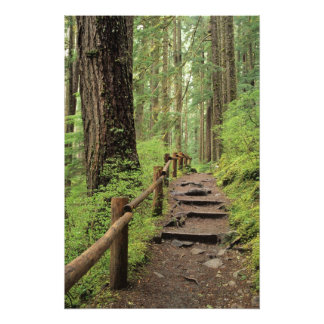 WA, Olympic NP, Sol Duc Valley, rainforest Photo Print