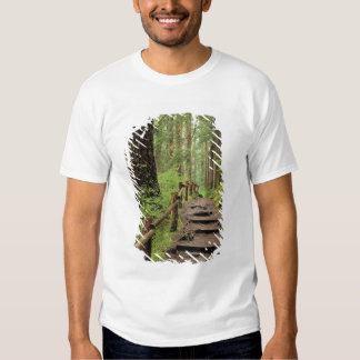 WA, Olympic NP, Sol Duc Valley, rainforest Tshirts