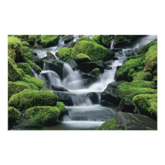 WA, Olympic NP, Sol Duc Valley, stream with Art Photo