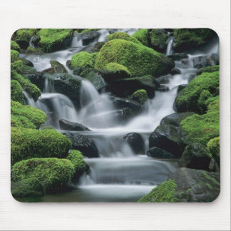 WA, Olympic NP, Sol Duc Valley, stream with Mouse Mat