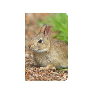 WA, Redmond, Eastern Cottontail baby rabbit Journal